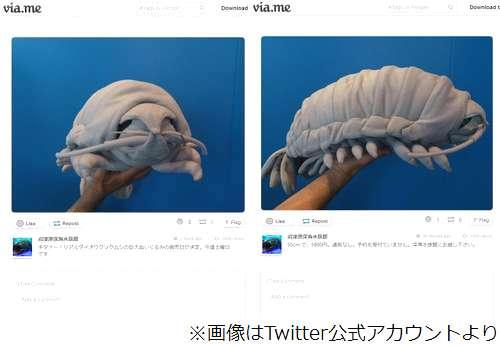 【画像】グソクムシの巨大ぬいぐるみ、沼津港深海水族館で販売 どうすんだこれ